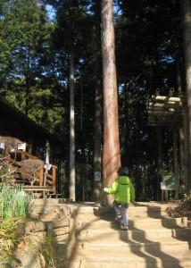 いこいの森 入口。